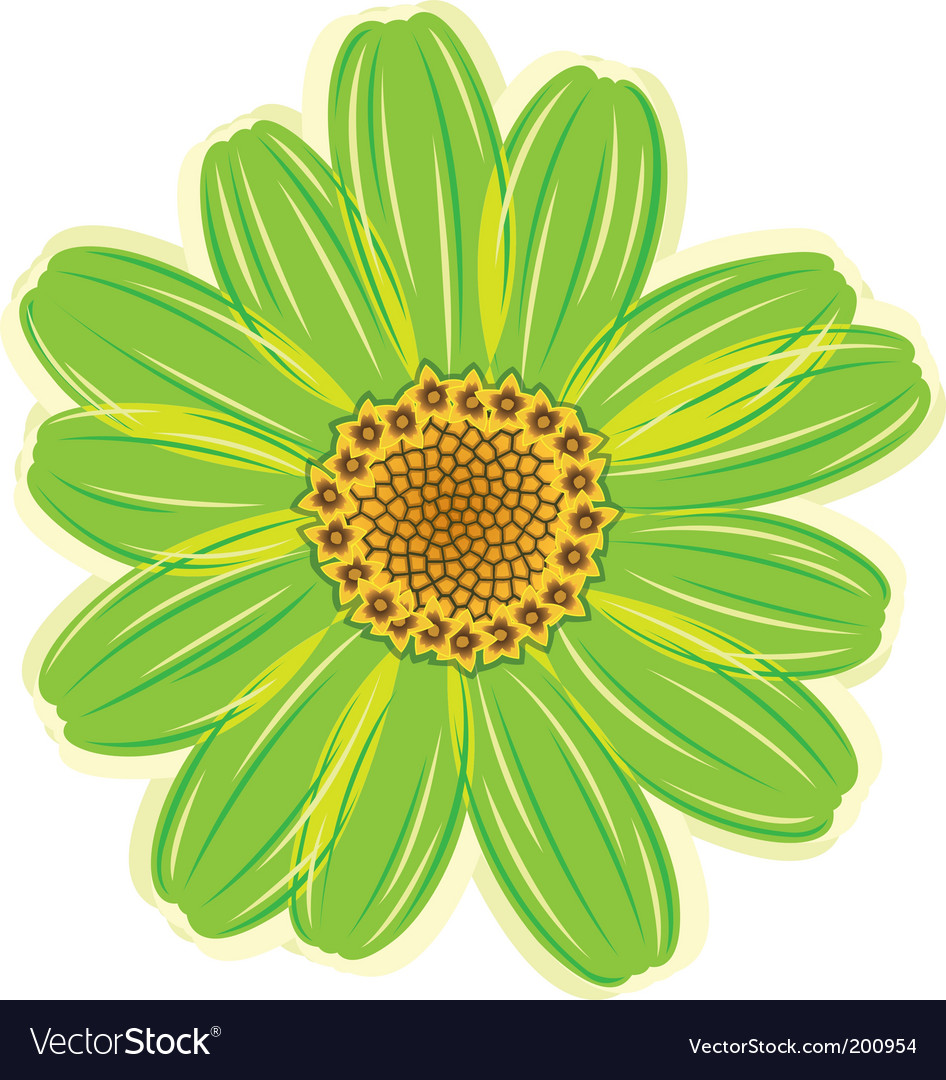 Daisy flower vector image