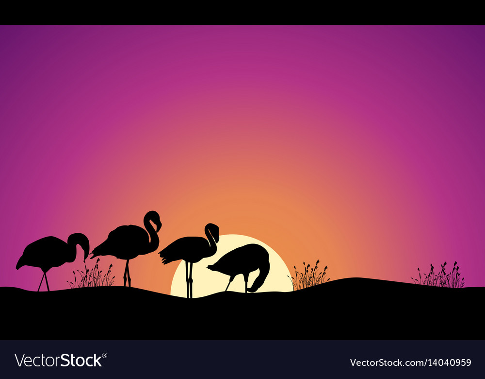 Collection stock of flamingo scene silhouettes vector image