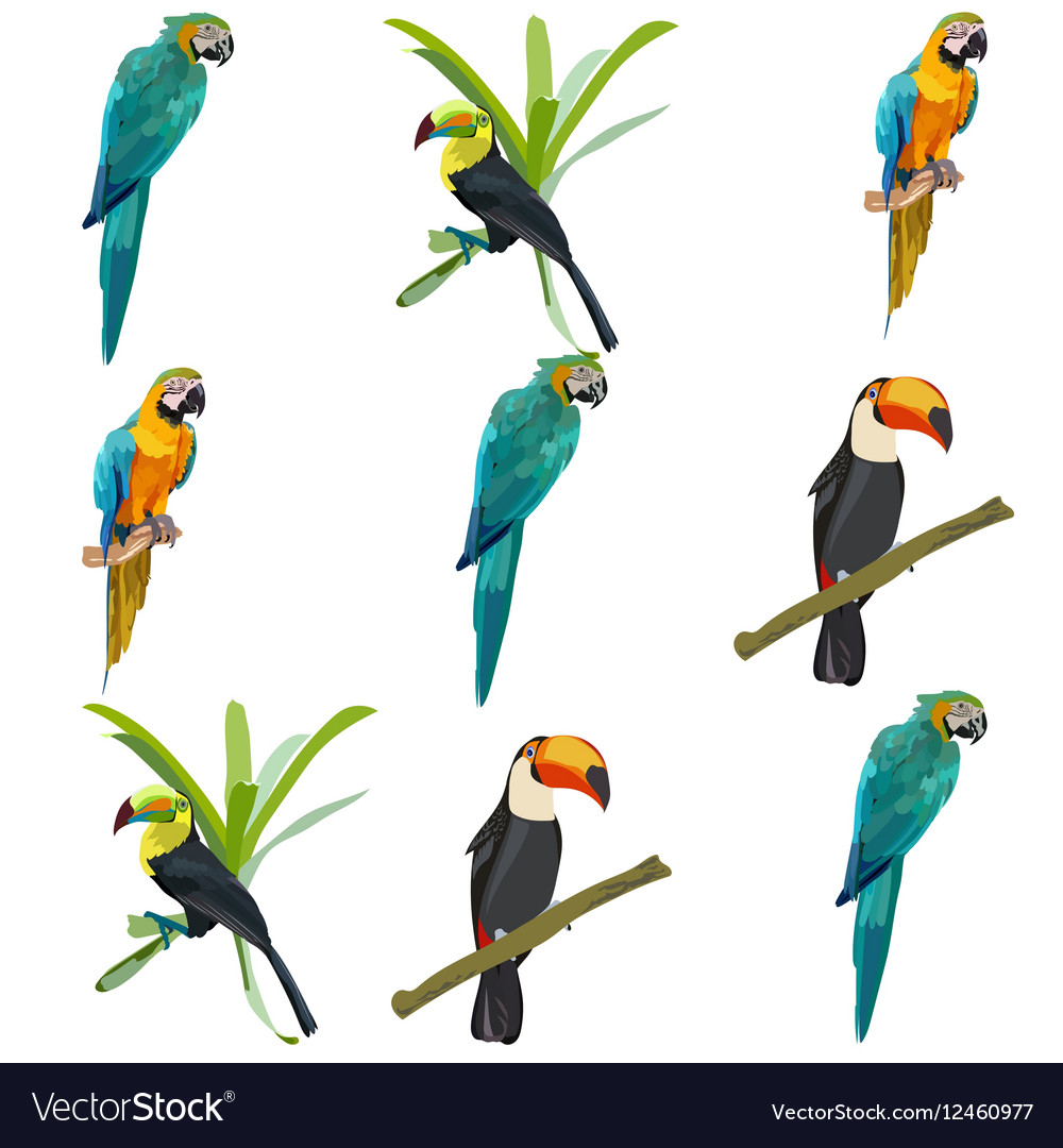 Parrots set collection vector image