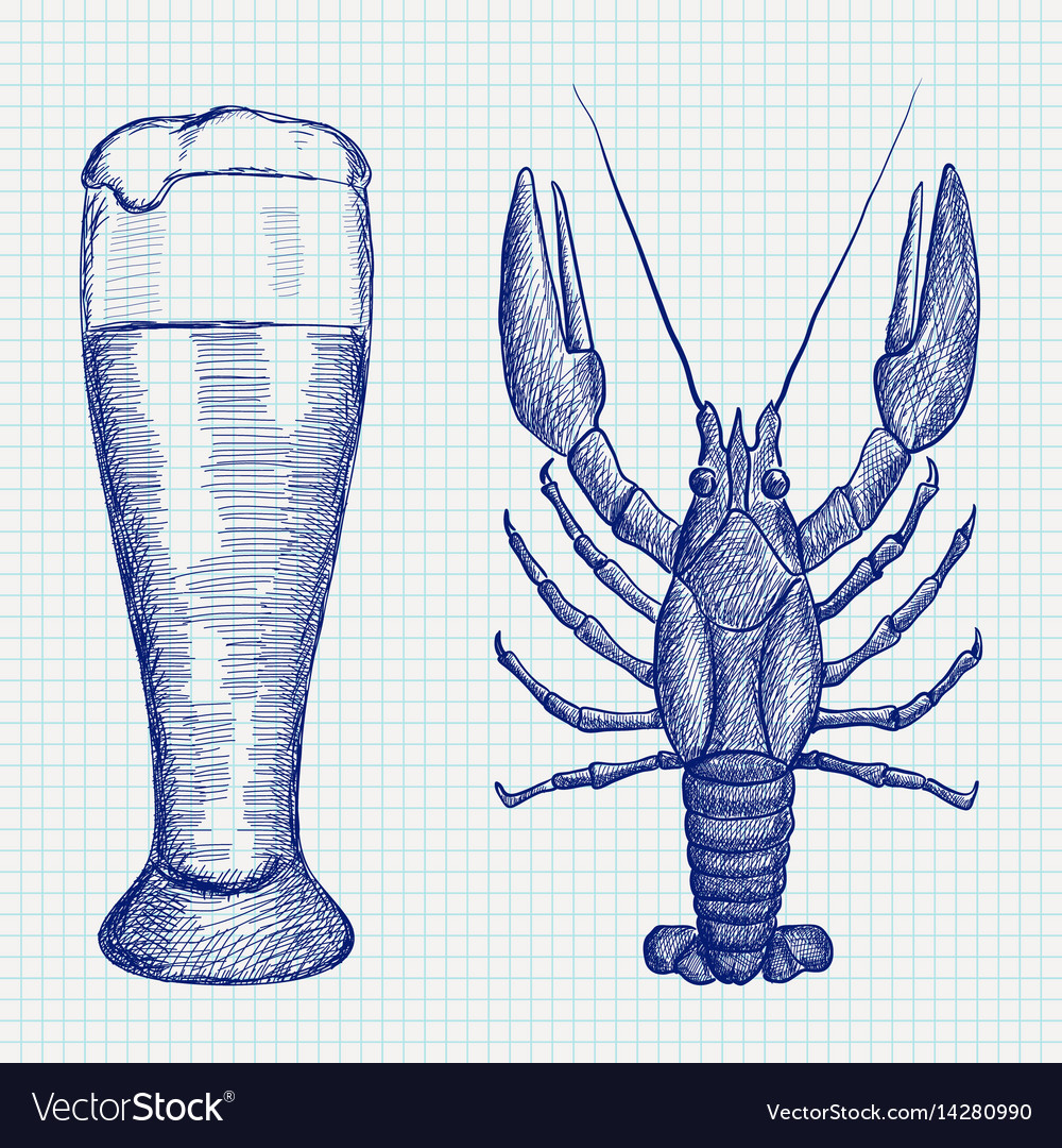 Lobster and glass of beer hand drawn sketch vector image