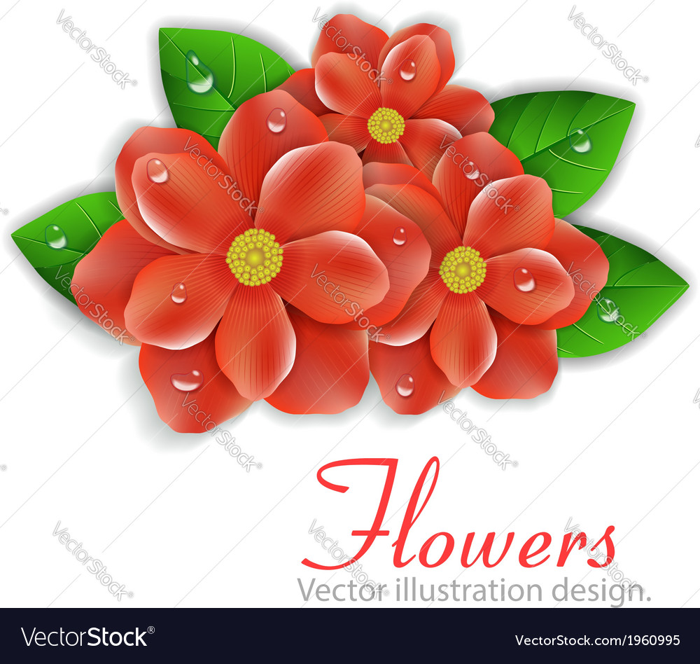 Red flowers vector image