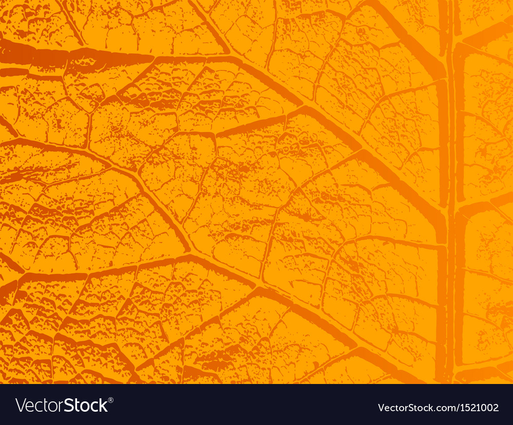Dry autumn leave template vector image