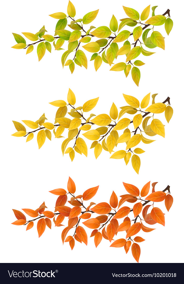 Set branches with autumn leaves vector image