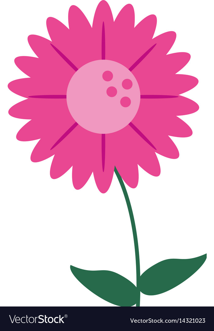 Gerbera flower natural image vector image