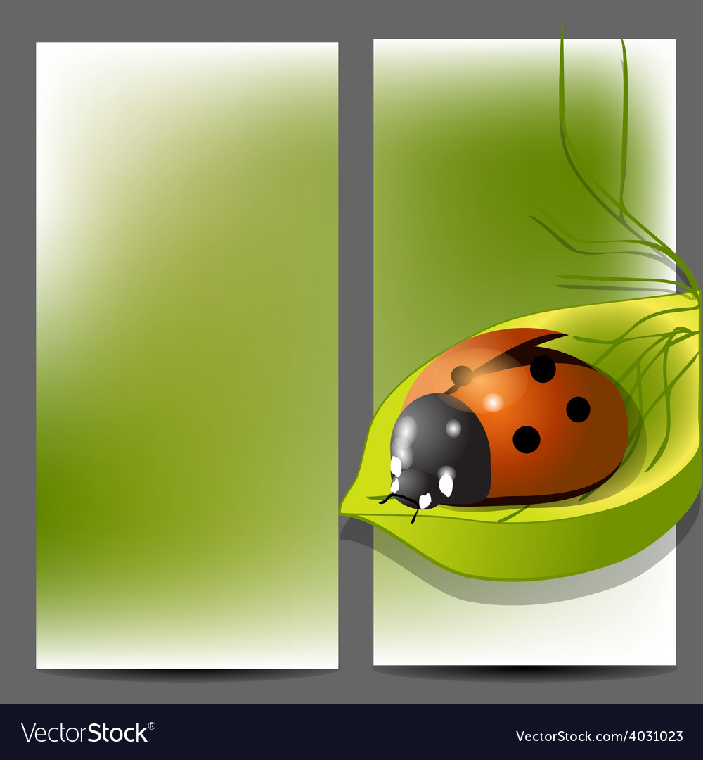 Template for brochure with ladybug vector image