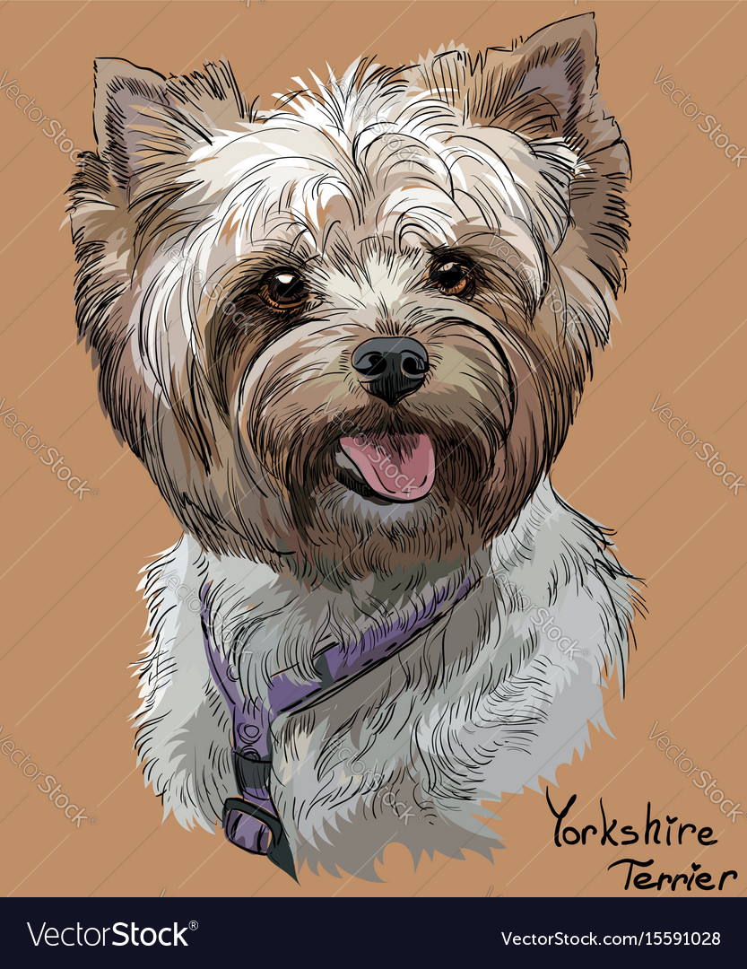 Coloful hand drawing portrait of yorkshire vector image