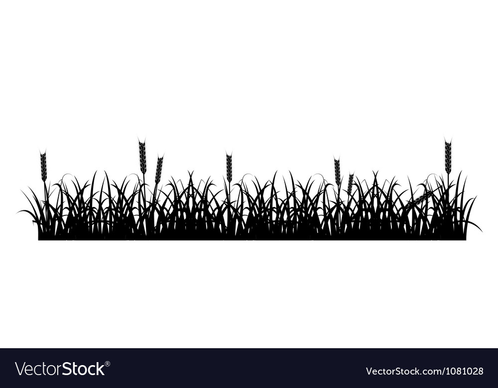 Grass and Wheat Silhouette vector image