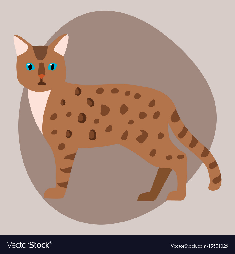 Cat breed bengal leopard cute pet brown fluffy vector image