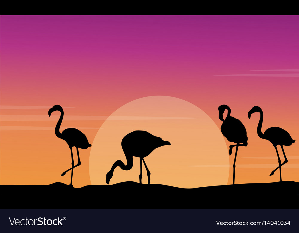 Flamingo silhouette scene at sunset vector image