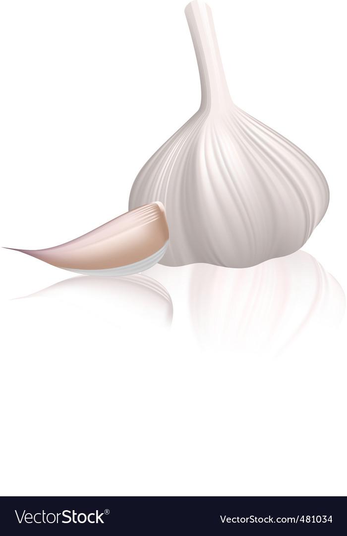 Garlic with clove vector image
