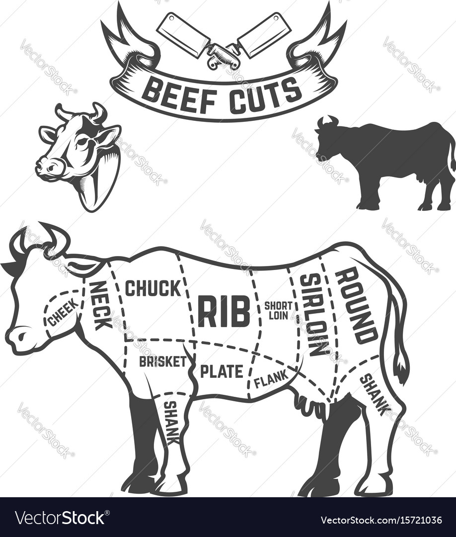 Beef cuts butcher diagram cow on white background vector image beef cuts butcher diagram cow on white background vector image pooptronica
