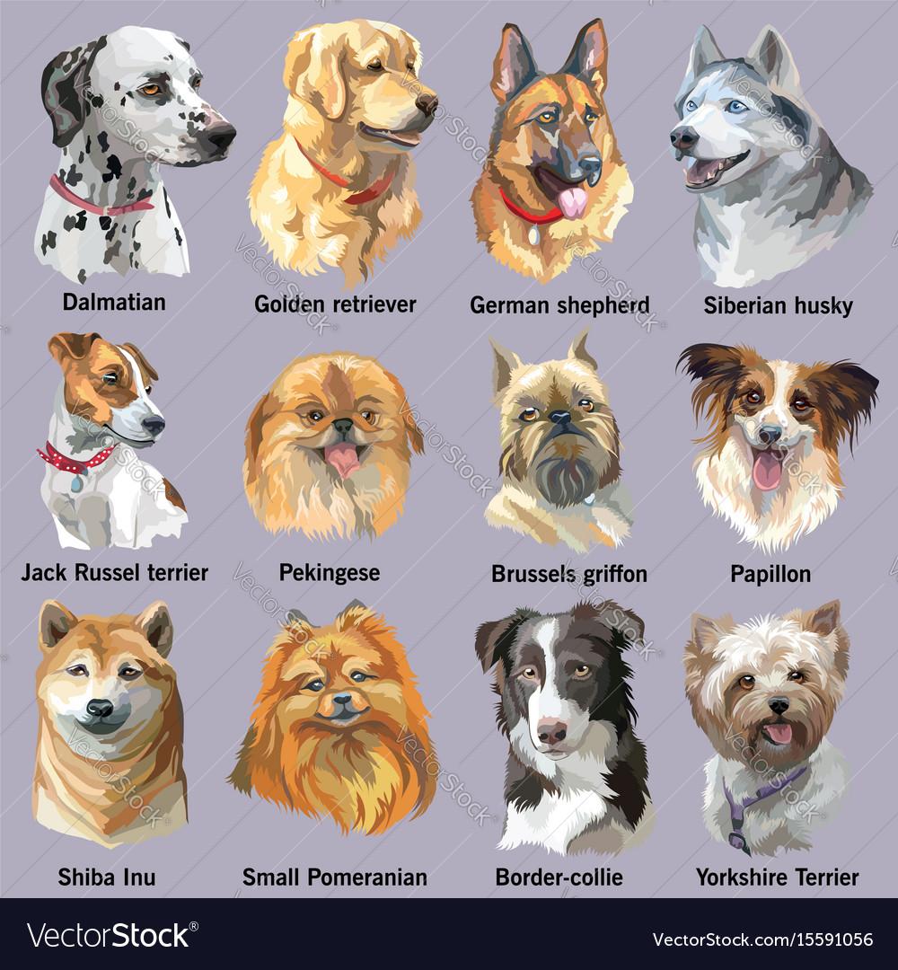 Set of portraits of dog breeds vector image