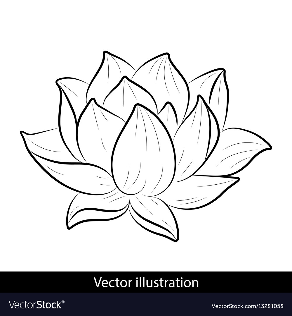Sketch of a lotus on a white background vector image