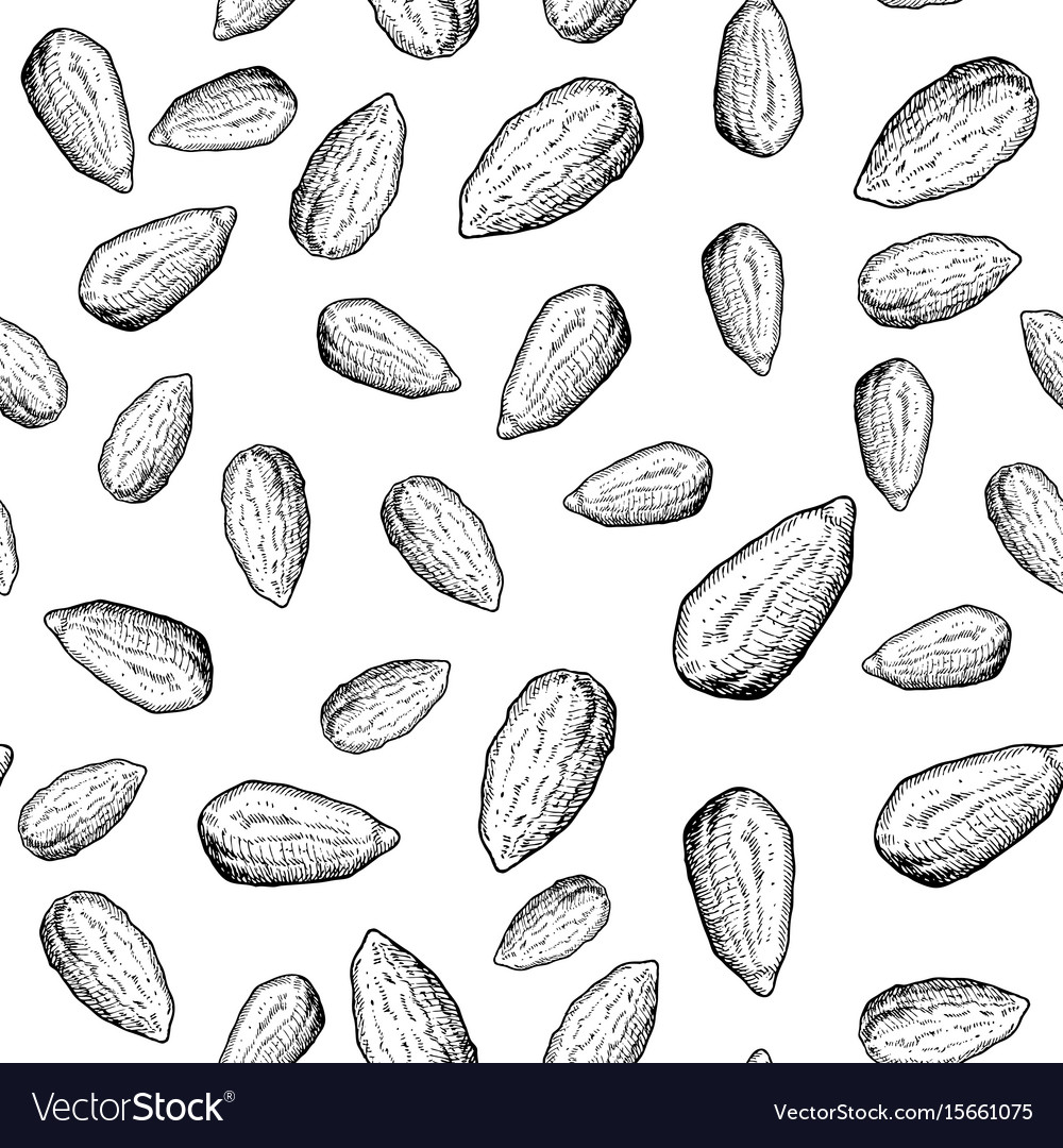 Almond nut seamless pattern hand drawn vector image