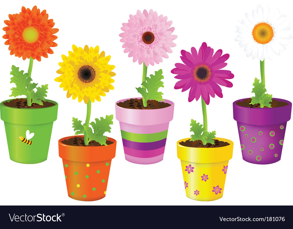 Daisies in pots with pictures vector image