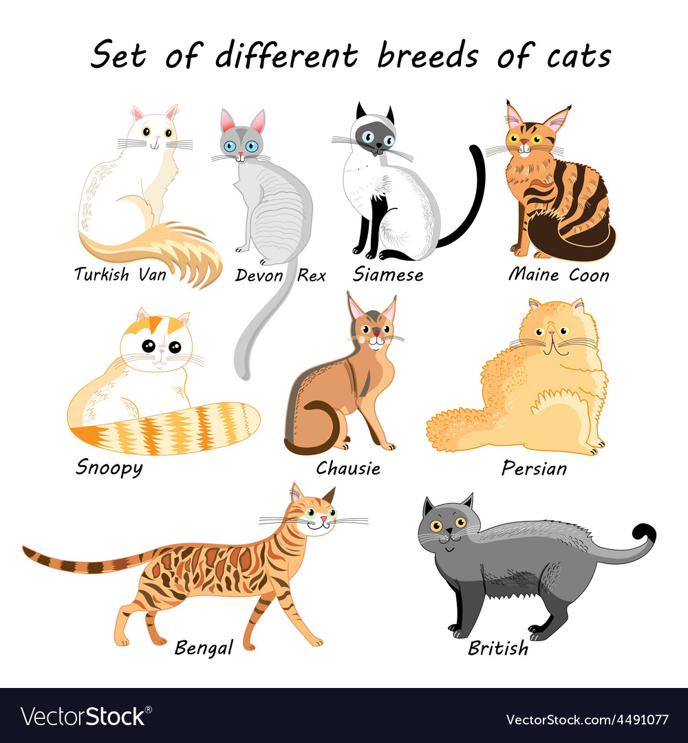 Set of cat breeds Royalty Free Vector Image VectorStock