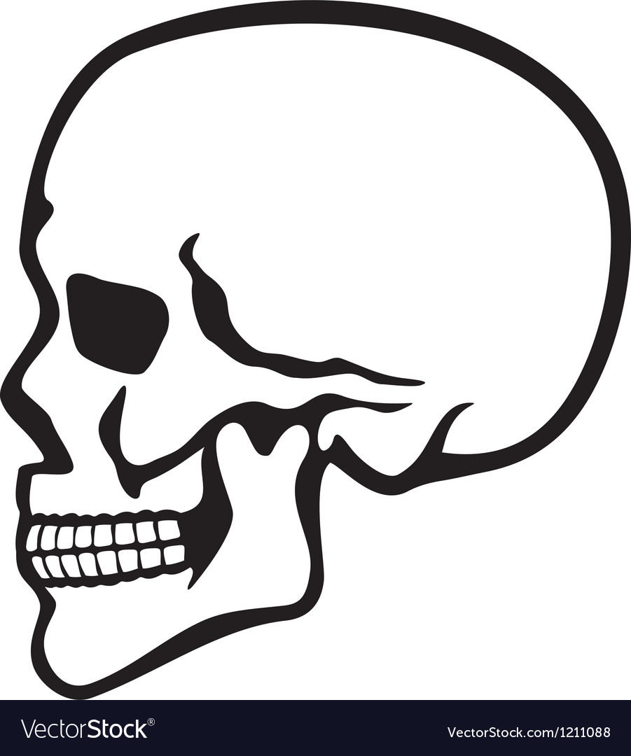 human skull profile royalty free vector image vectorstock