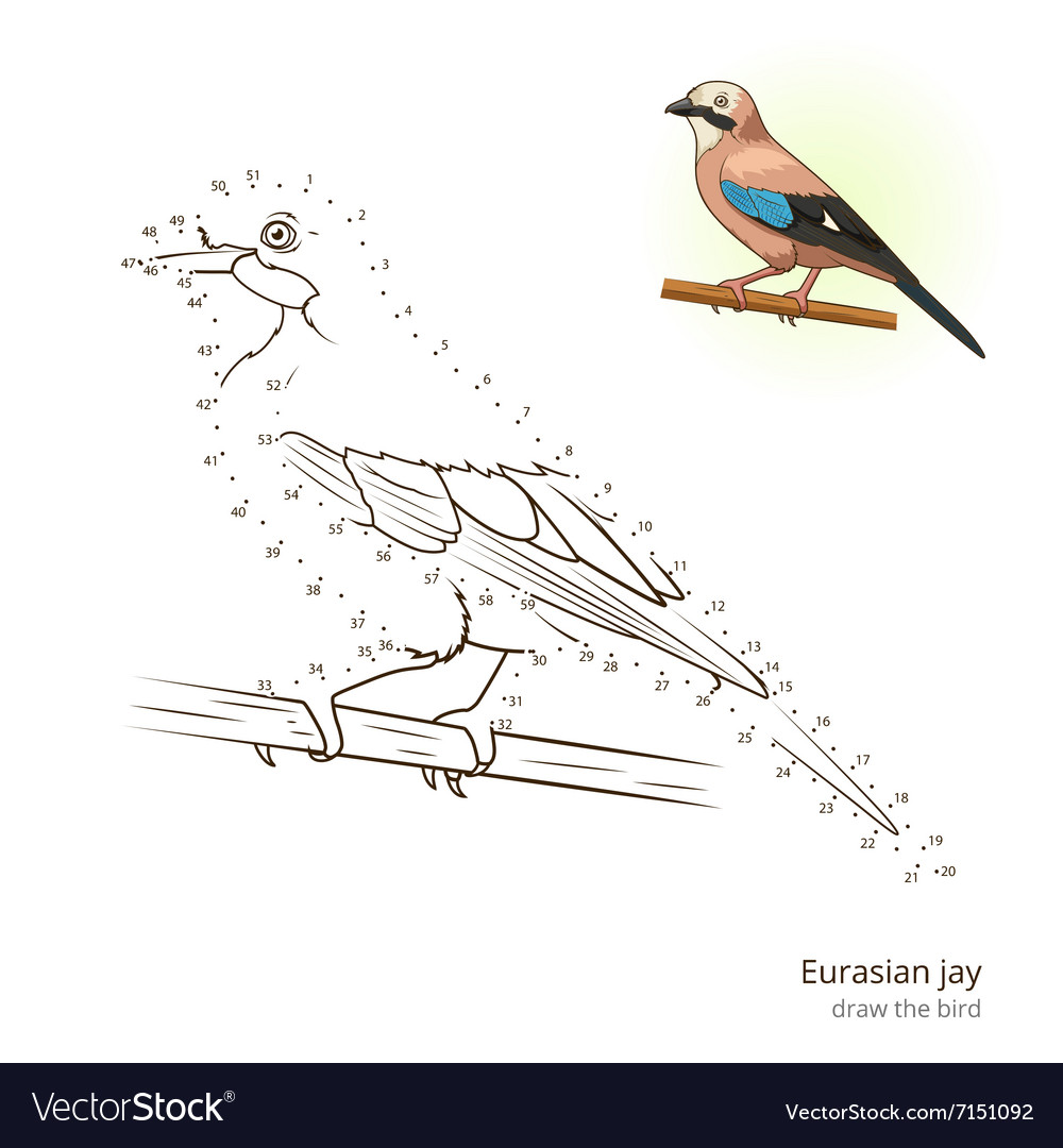 eurasian jay bird learn to draw vector image
