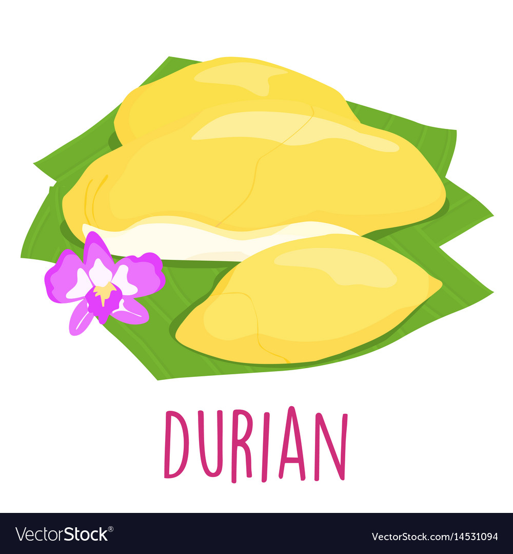 Durian thai popular fruit white background vector image