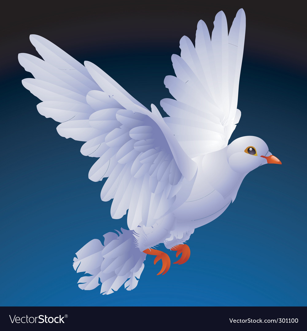 White dove vector image