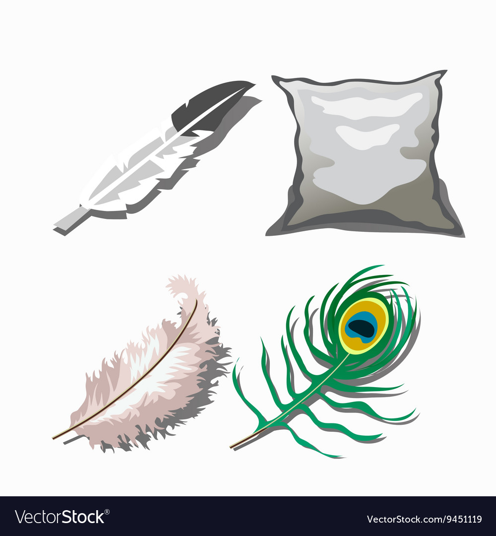 Three different feathers and white pillow vector image