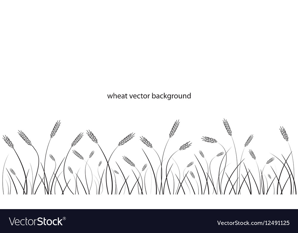 Wheat field line border isolated on white vector image