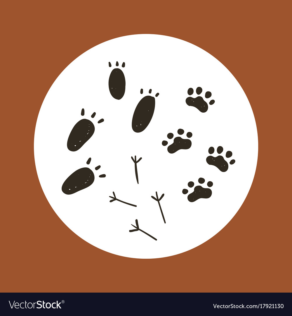Boho collection with animal foot print vector image