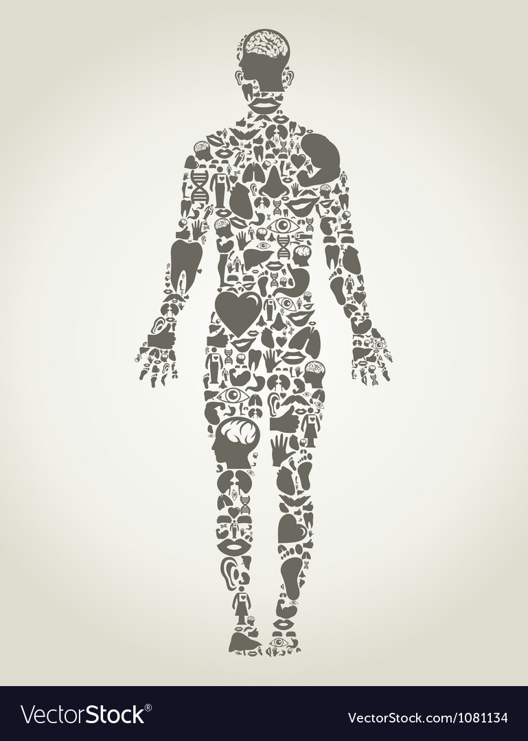 Parts body the person vector image