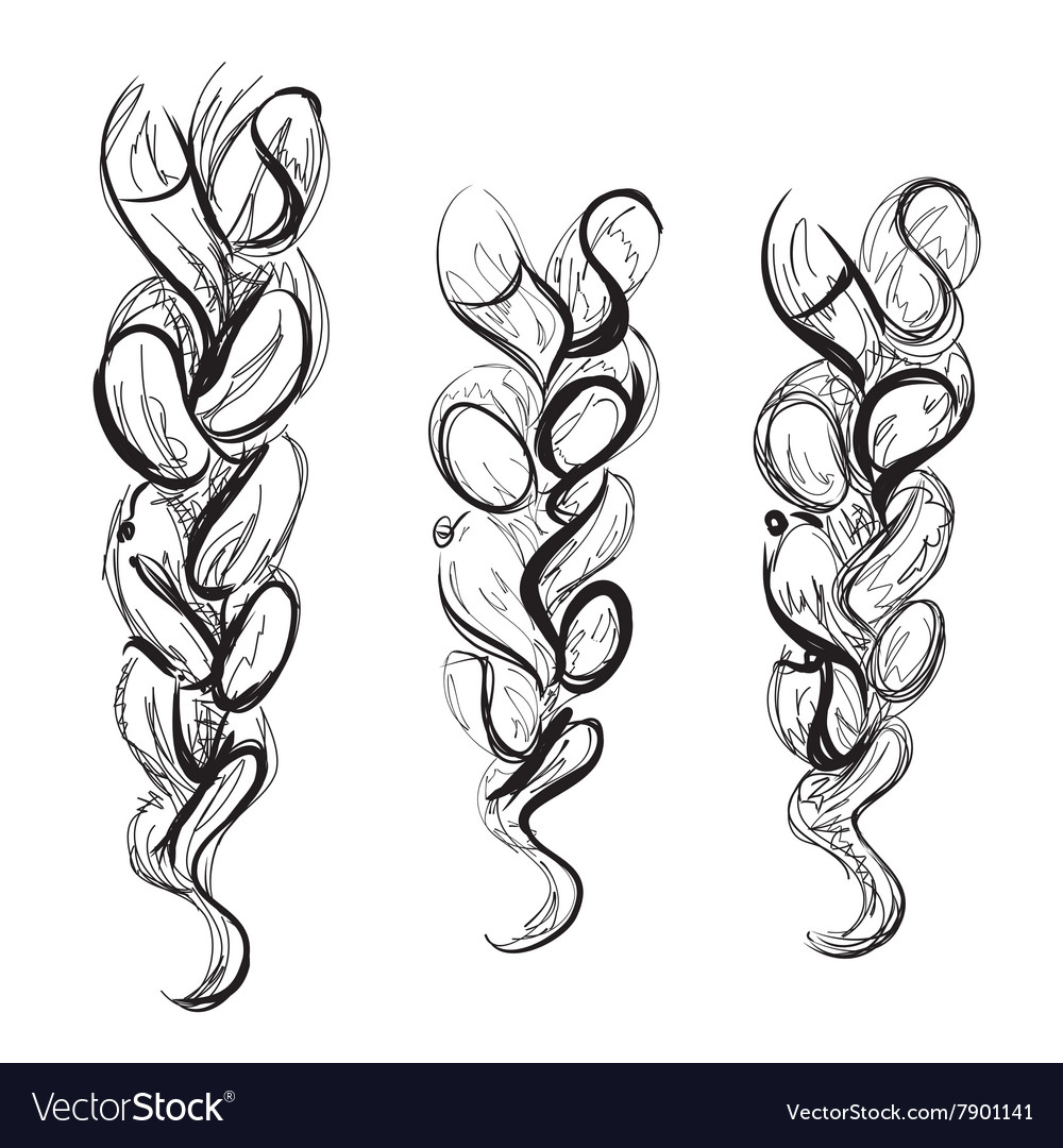 Braid sketch Hand drawn poster for hair salon vector image