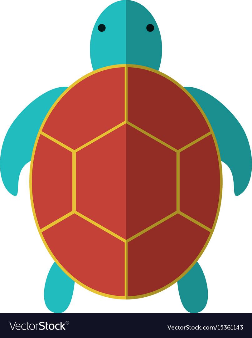 Tortoise icon image vector image