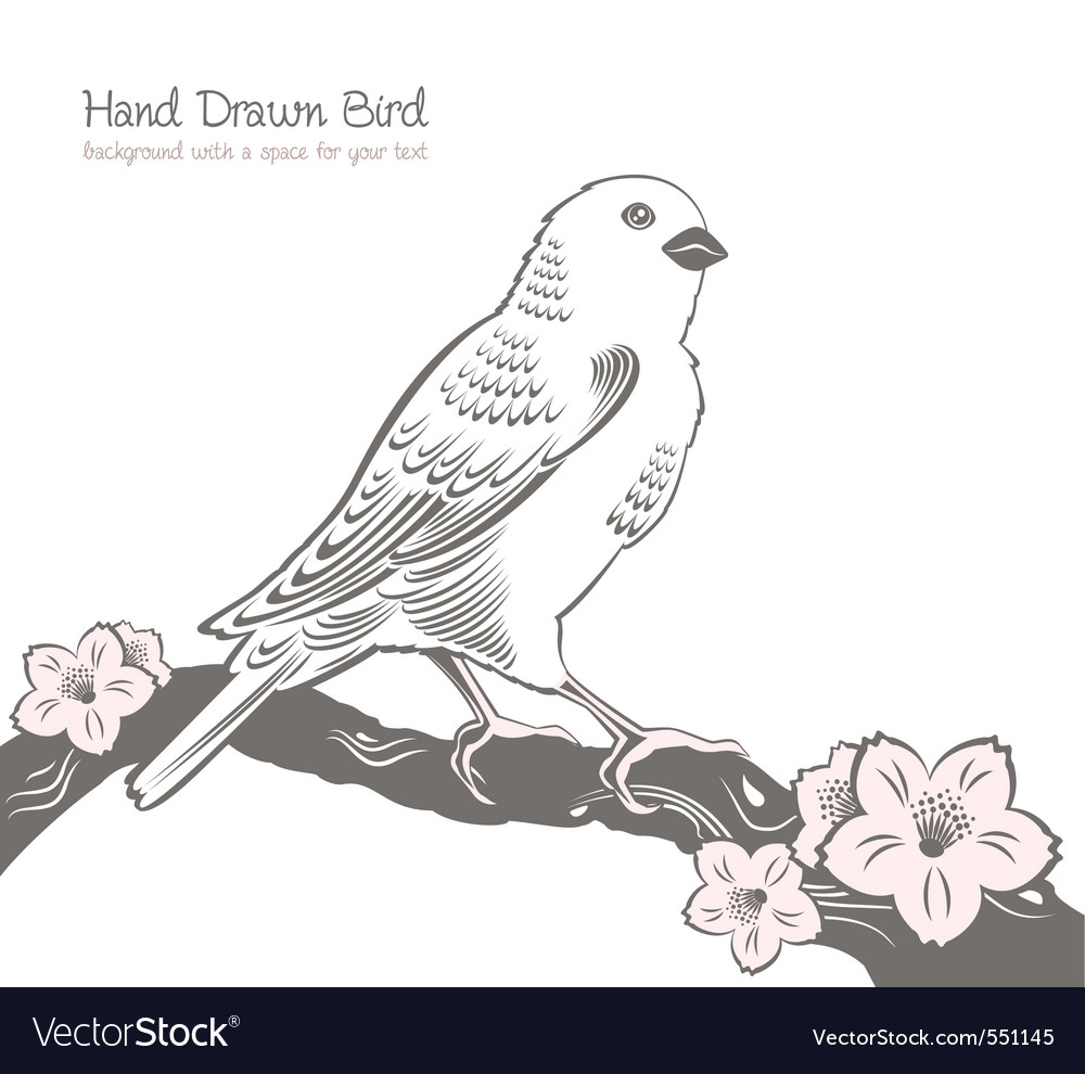 Bird on a branch drawing vector image
