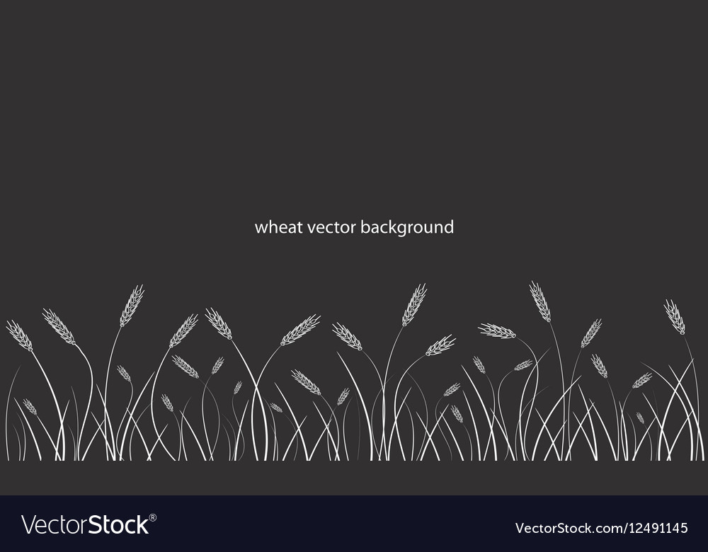 Wheat field line border on black background vector image