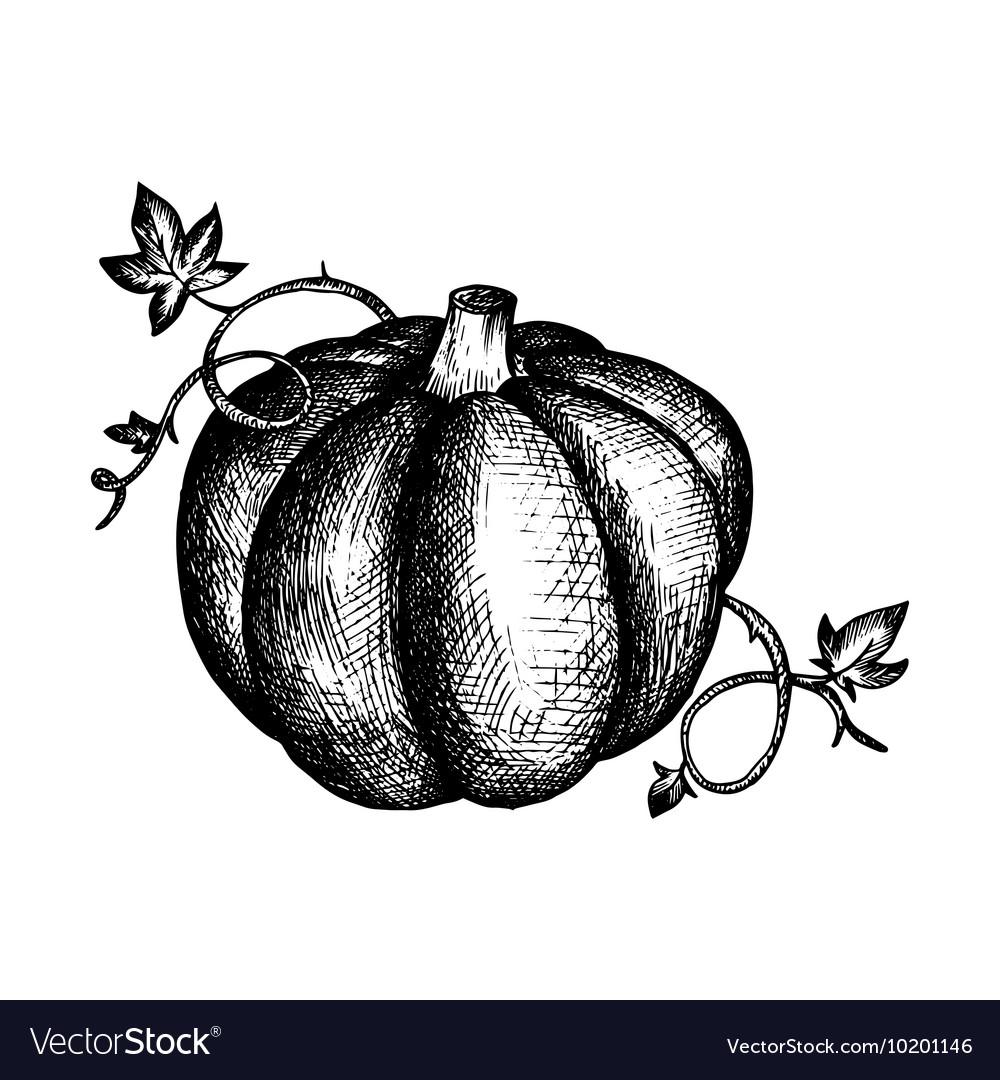 Vintage pumpkin and leaves vector image