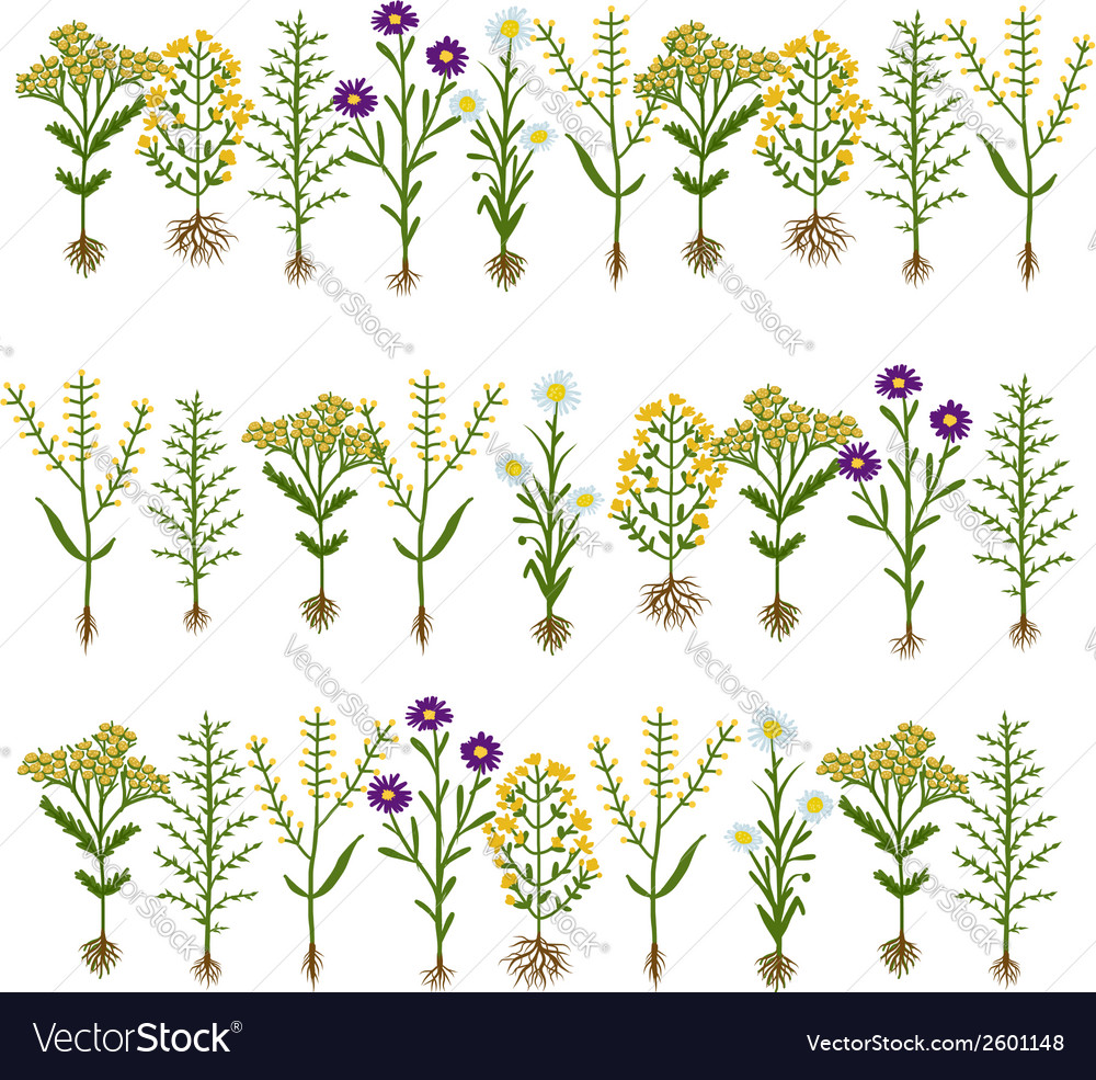 Herbarium flowers with roots sketch for your vector image