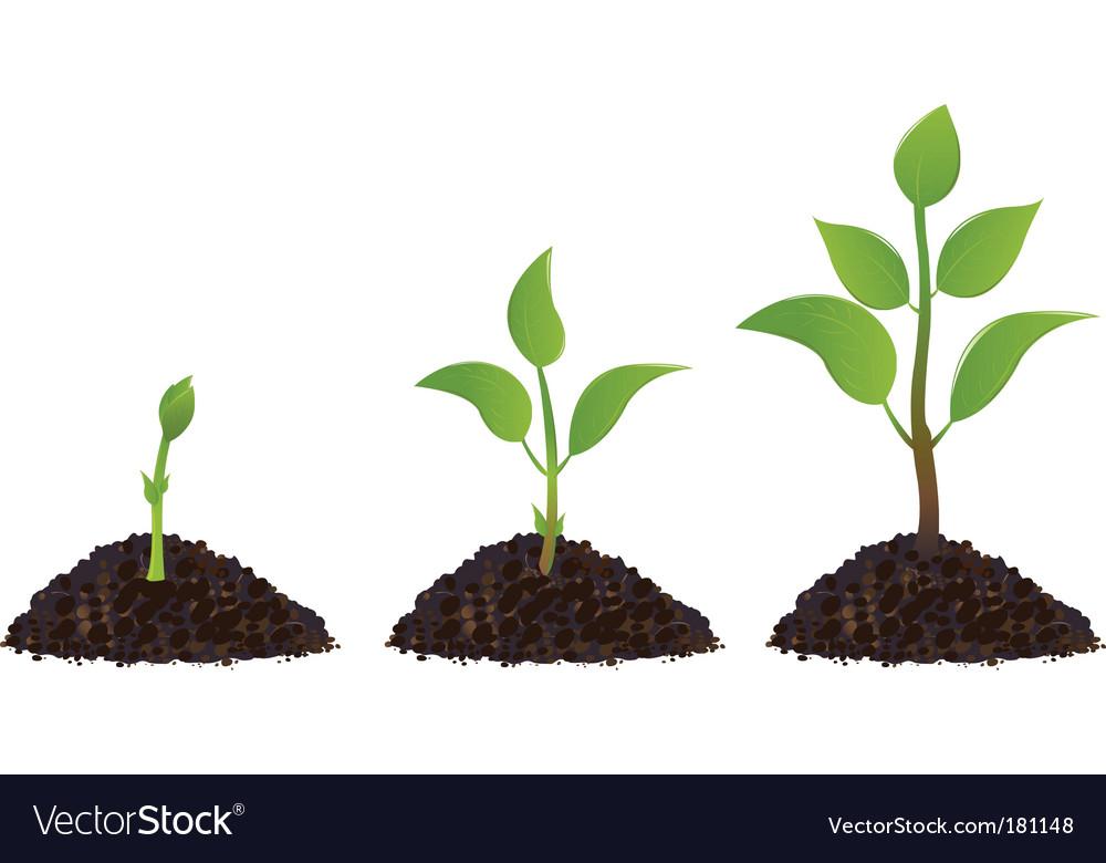 Plant life process vector image
