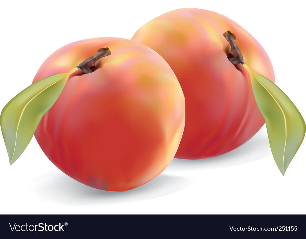 Peaches and leaves vector image