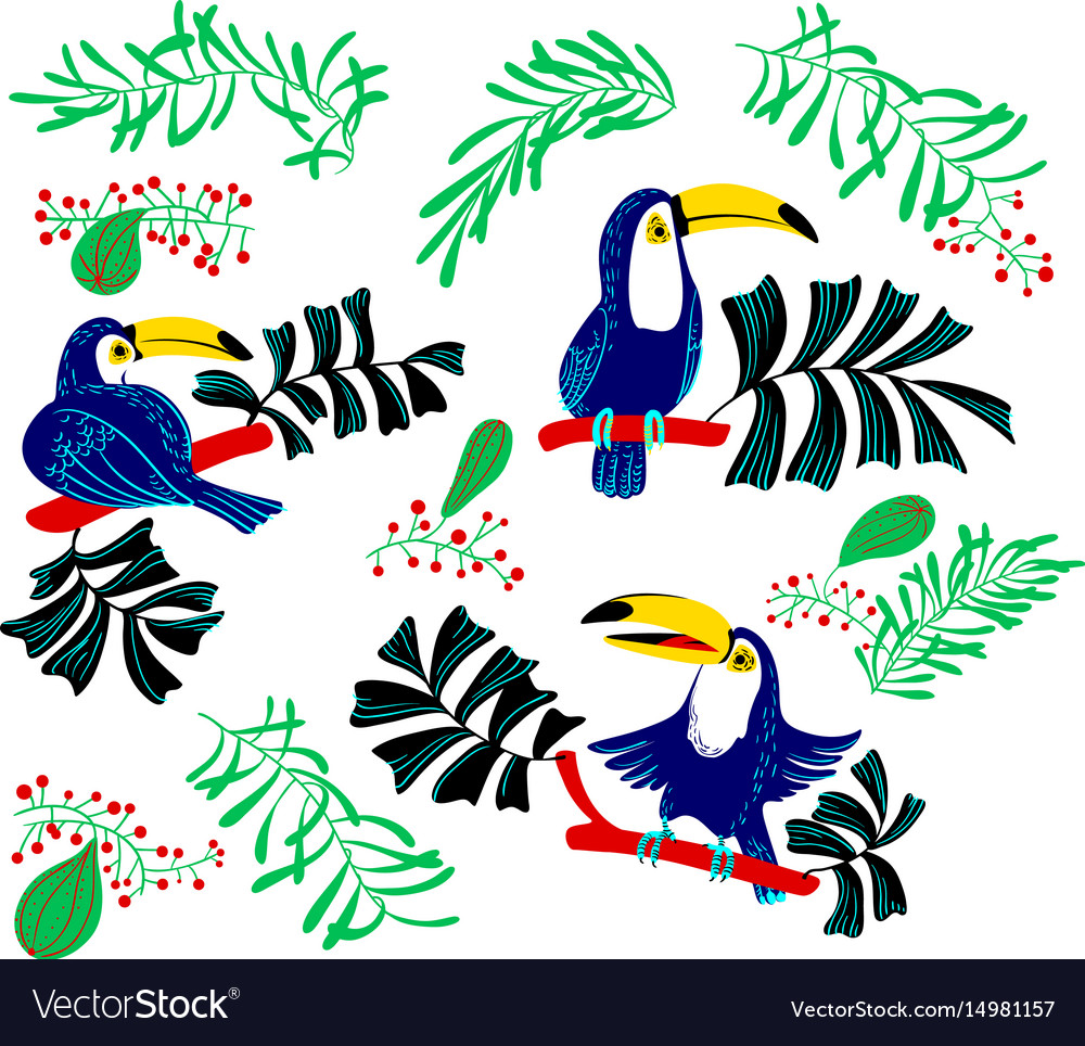 Tropical summer design elements isolated toucan vector image