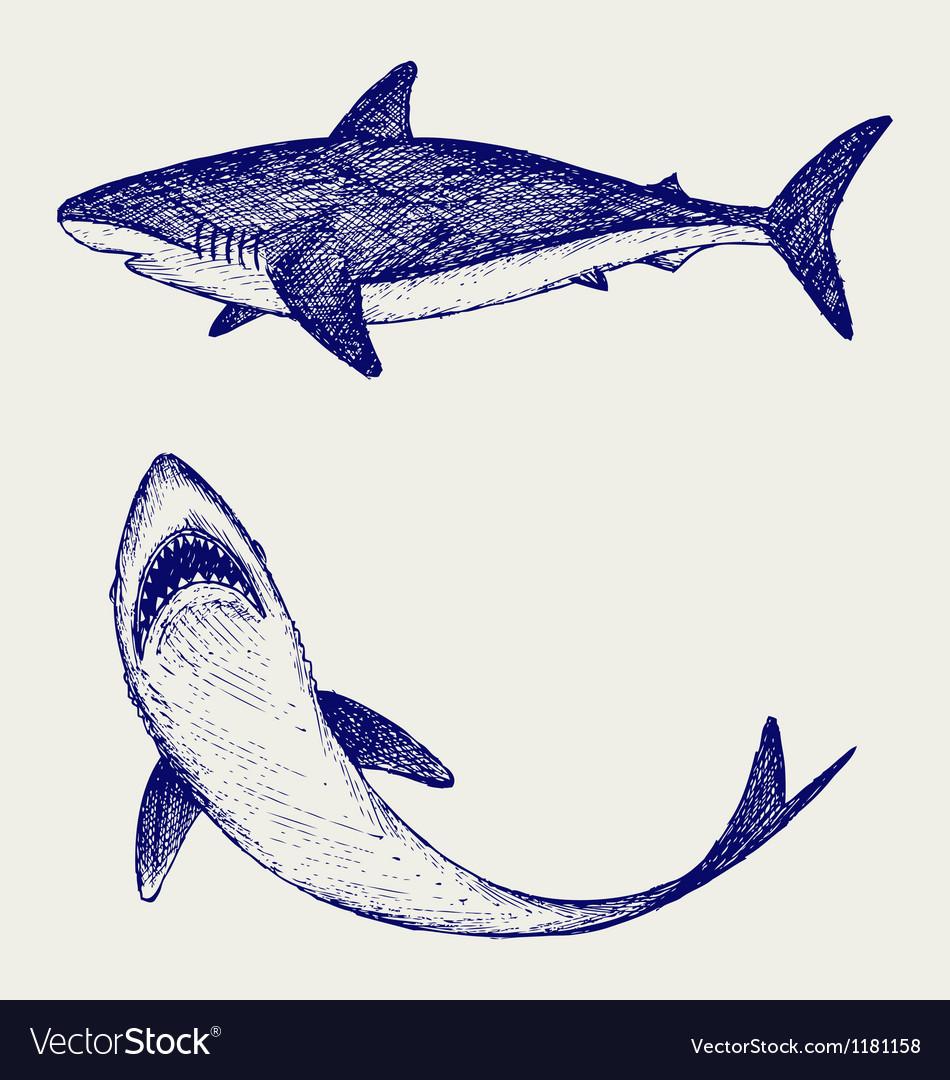 Reef Shark vector image