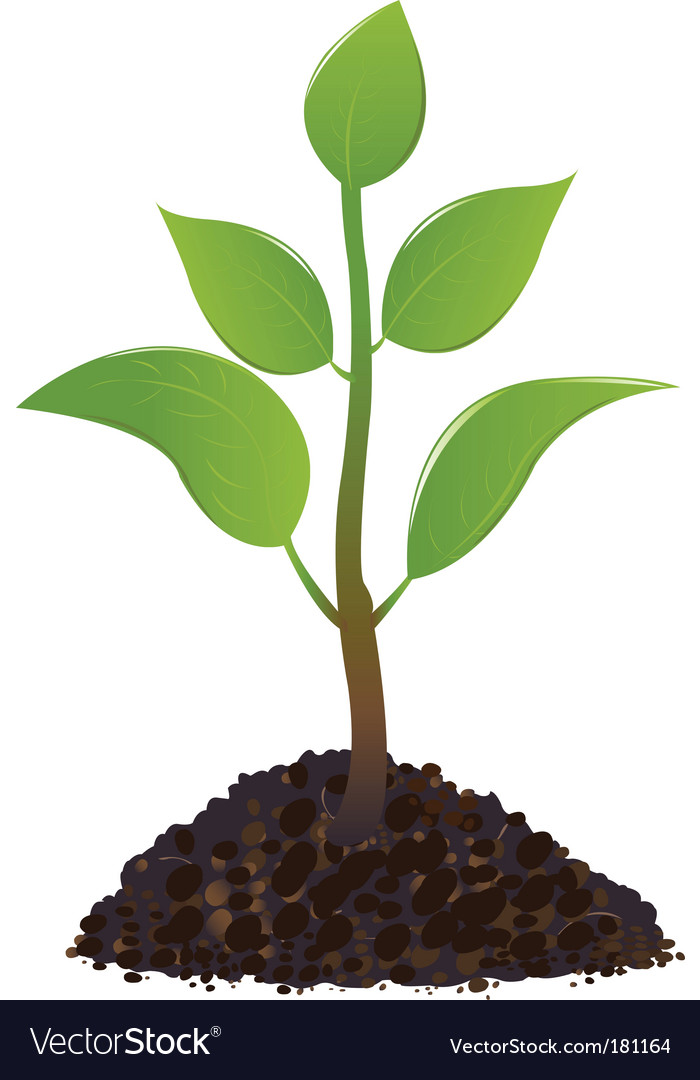 Young plant vector image