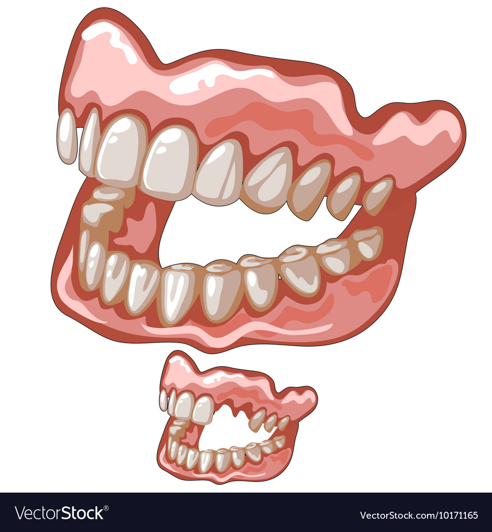 Funny dentures with white natural-looking teeth vector image
