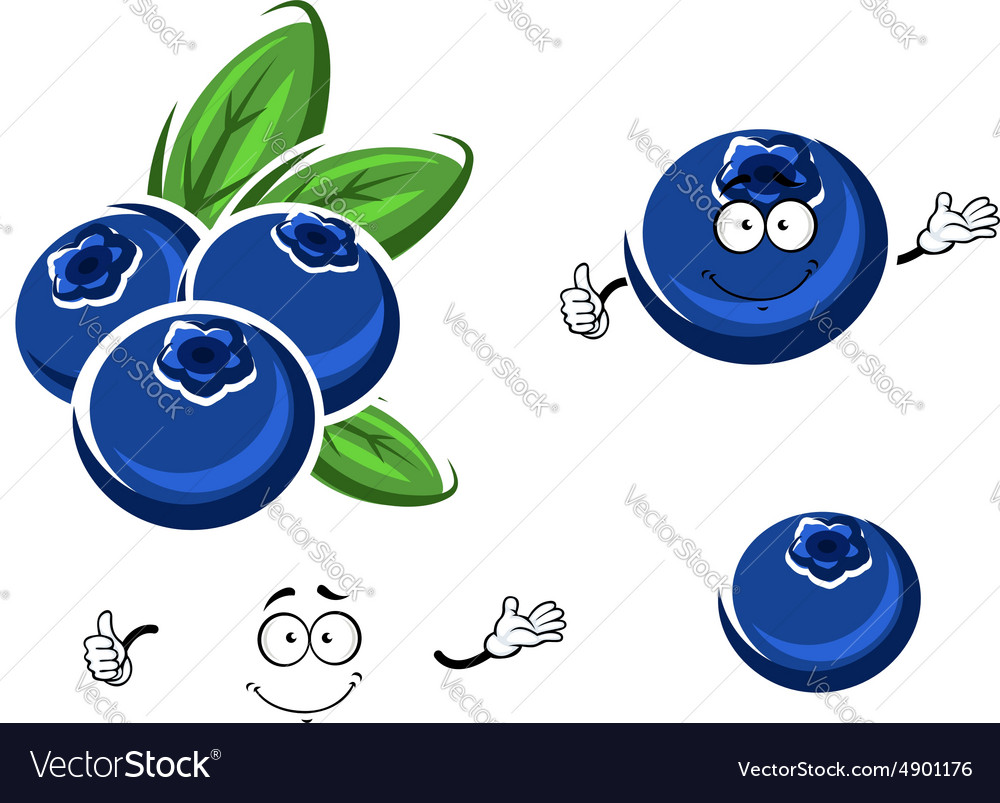 Cartoon fresh blueberry fruits on white vector image