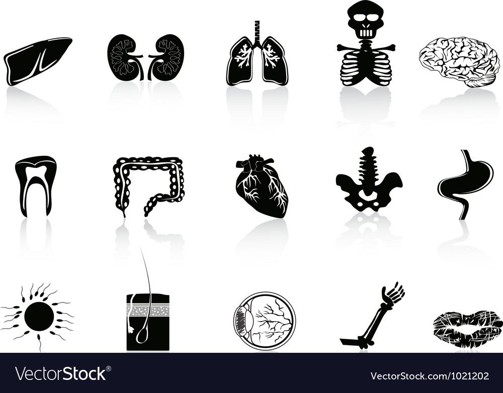 Black human anatomy icon vector image