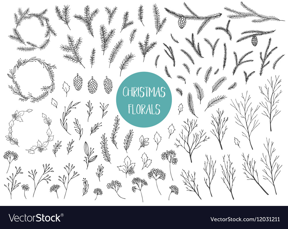 Chrismtas branches and plants vector image