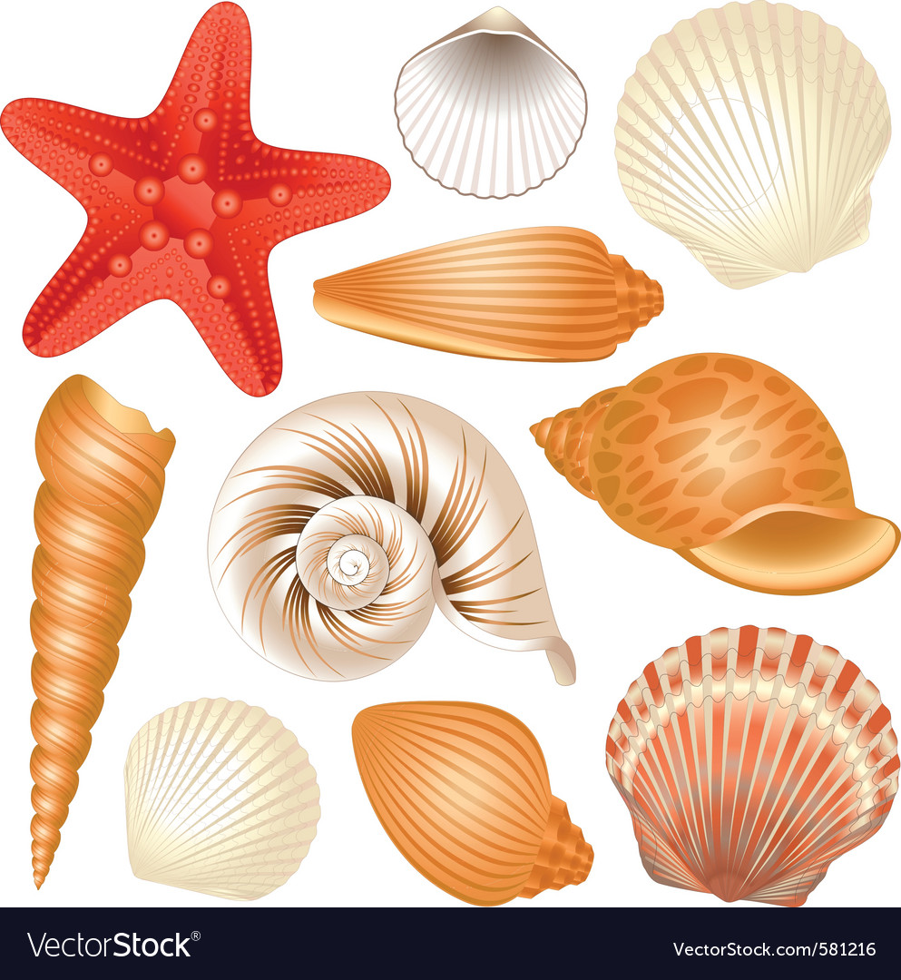 Seashells collection vector image