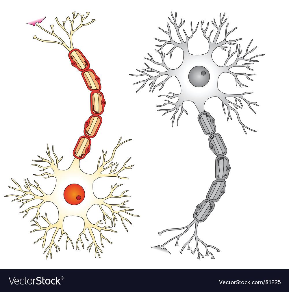 Neuron cell vector image