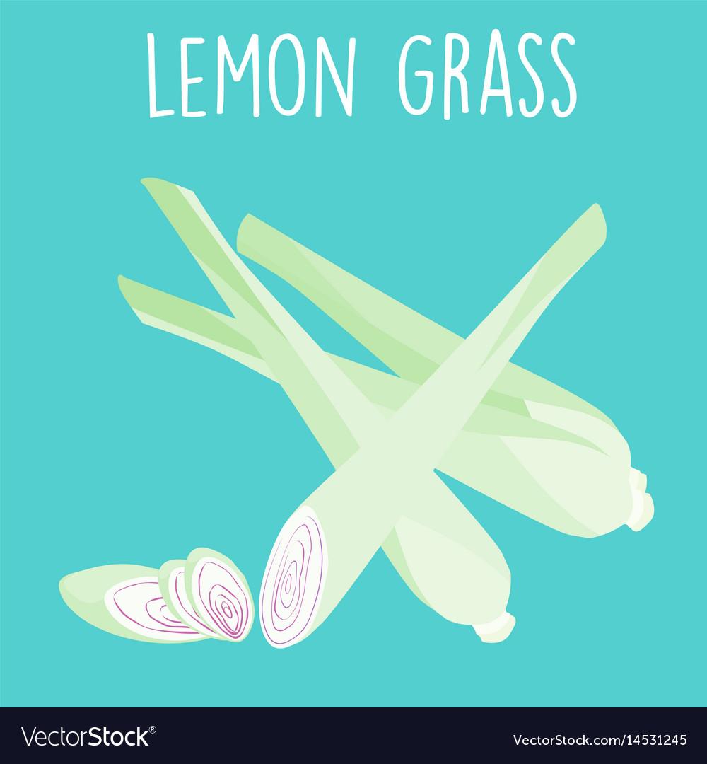 Fresh lemon grass plant and slice vector image