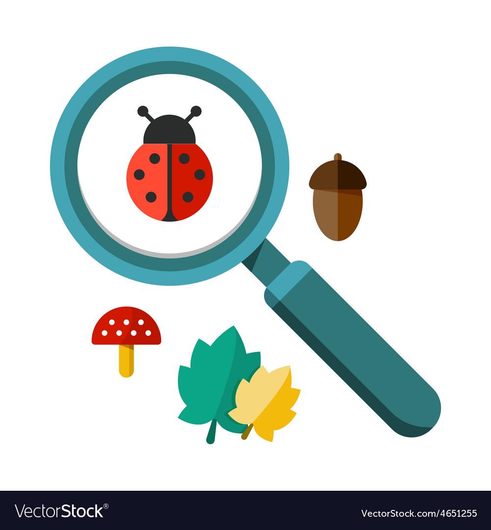 Ladybug and a magnifying glass vector image