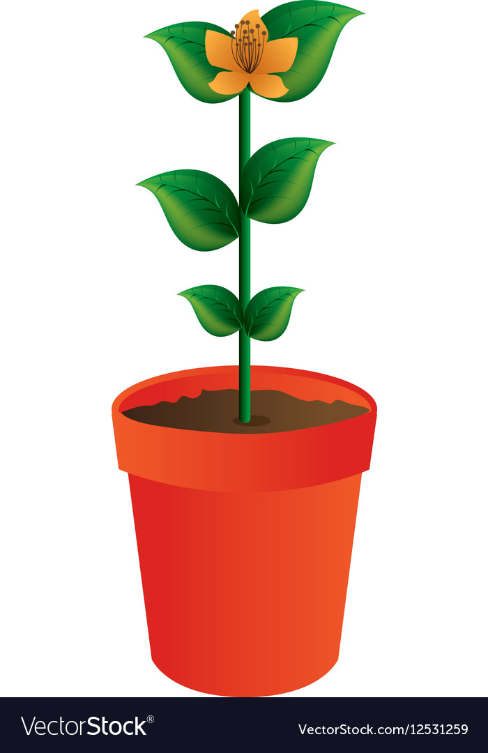 Flower in pot isolated icon vector image