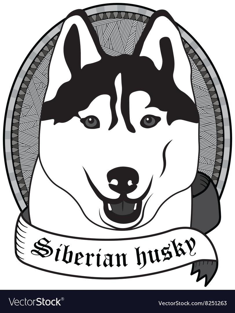 Siberian husky Portrait Isolated dog vector image