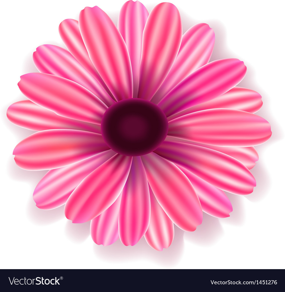 Flowers realistic vector image
